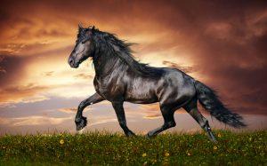 Idei de cadouri pentru iubitorii de cai