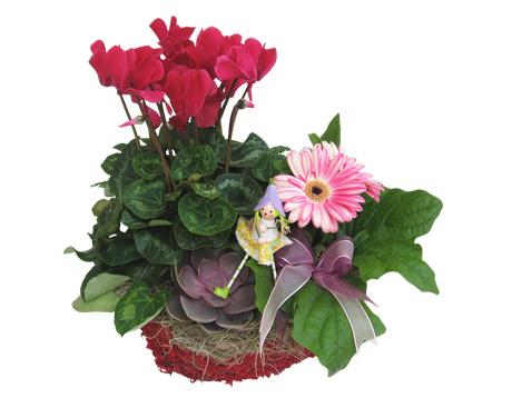 Aranjament floral in ghiveci
