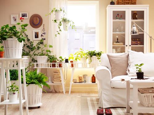 casa-flori-plante-