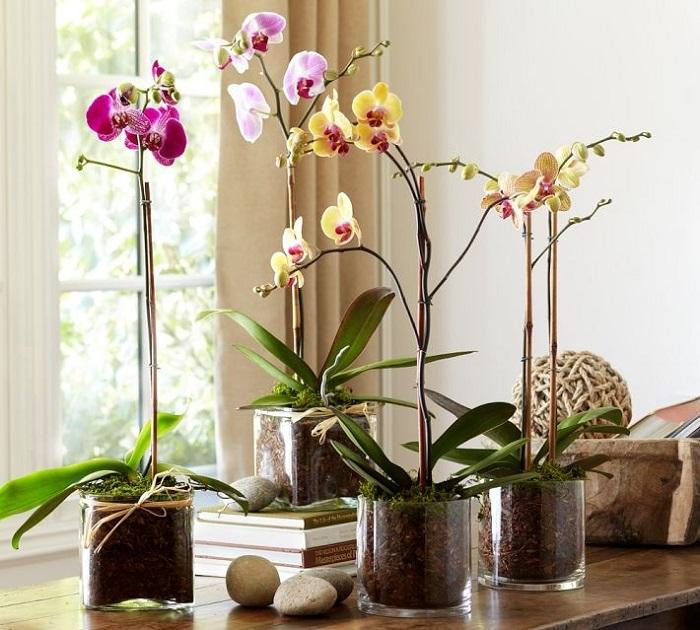 orhidee de interior