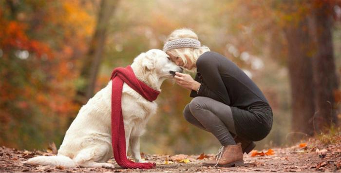 Cadouri pentru iubitorii de caini si alte animale