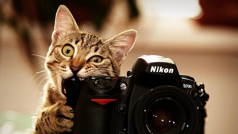 Aparat foto si pisica
