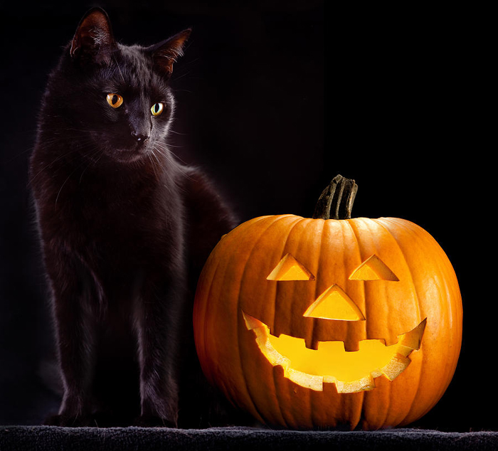 Dovleac si pisica neagra de Halloween