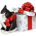 Cutii de cadouri pentru o prezentare speciala