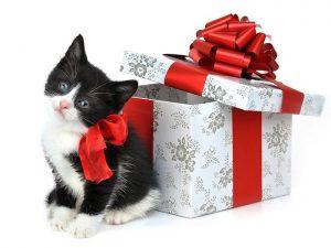 Cadouri originale pisicuta cadou