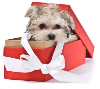 cadouri pentru fete cochete