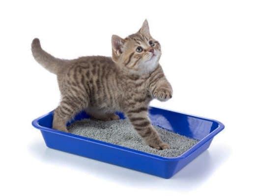 Cum scapi de mirosul de pisica